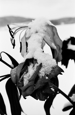 『冬の庭』シリーズ『NORTHERN』より