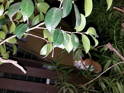 いくしゅんによる作品解説:枝にピント合わせて猫のボケ感はなりゆきで。