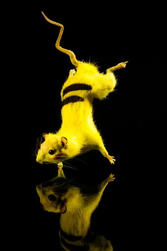 『SUPER RAT』(2006, 2011) Photo:Yoshimitsu Umekawa ©Chim↑Pom Courtesy of the artist and MUJIN-TO Production, Tokyo