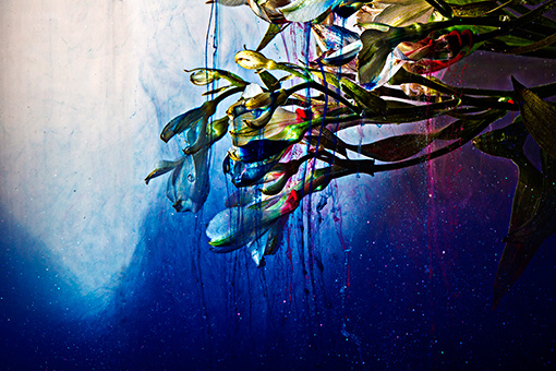田中が撮影した相壁の作品