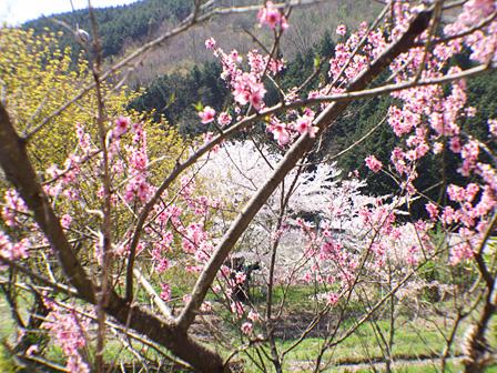 村の春の風景