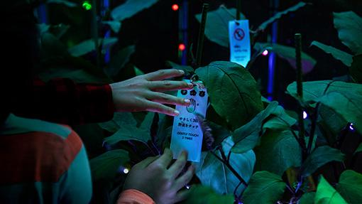 『でじべじ -Digital Vegetables- by PARTY』内に植えられた野菜